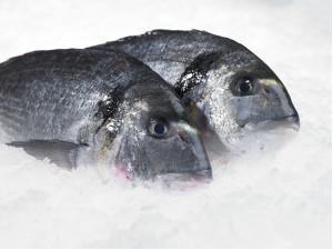 zeevishandel plugge